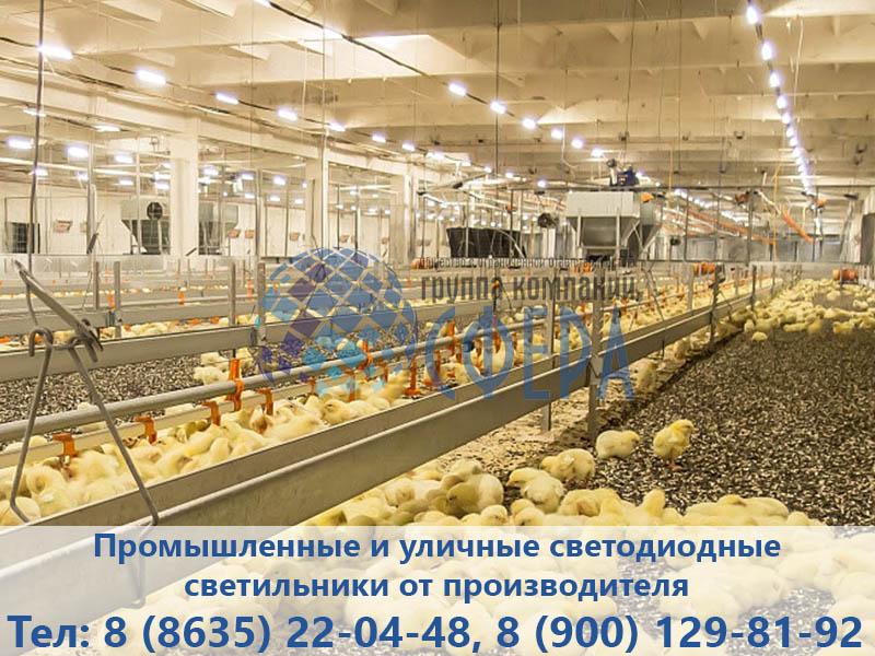 Фотография светодиодного освещения птицефабрики от ГК Сфера